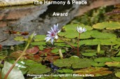harmony-peace-award