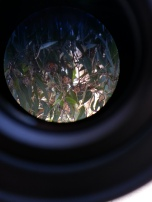 View through telescope at Pacific Grove Butterfly Sanctuary