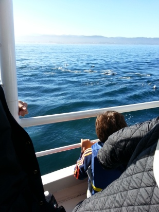 Dolphins off Moss Landing