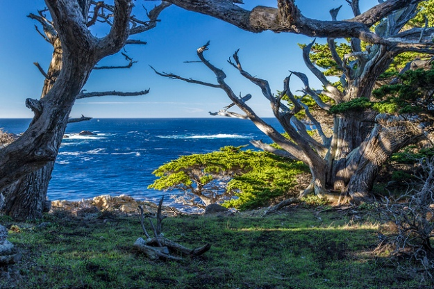 8273783340_94730e2374_z  Point Lobos Headland Cove by Fred Moore on Flickr