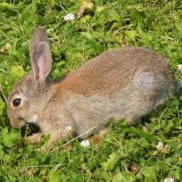 Similar to our visiting rabbits