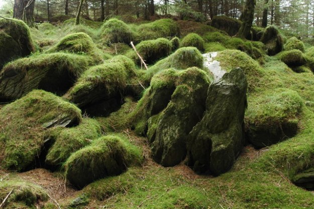 Moss_covered_rocks,_Beddgelert_Forest_-_geograph.org.uk_-_542866