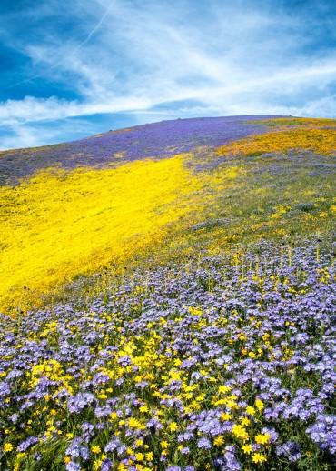 'God spilled paint' Super bloom Carrizo Plain National Monument 2017 via croft.de